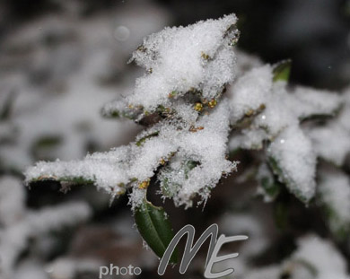 art_snowy_leaves