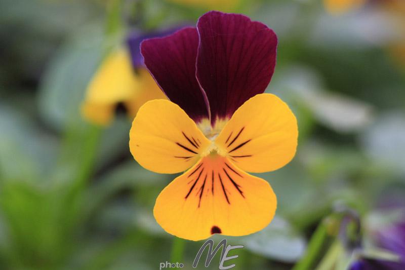 makro_flower
