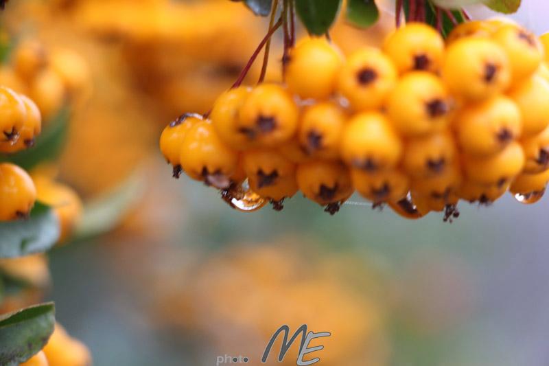 makro_flower_drop