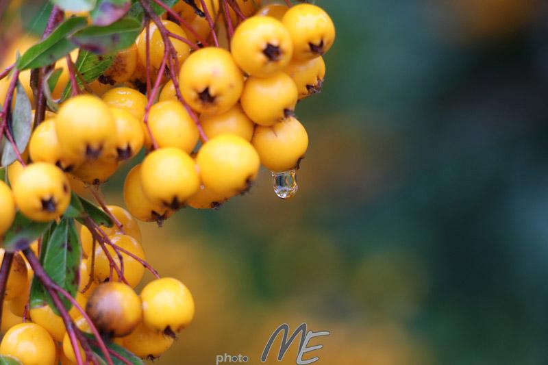 makro_flower_drop2