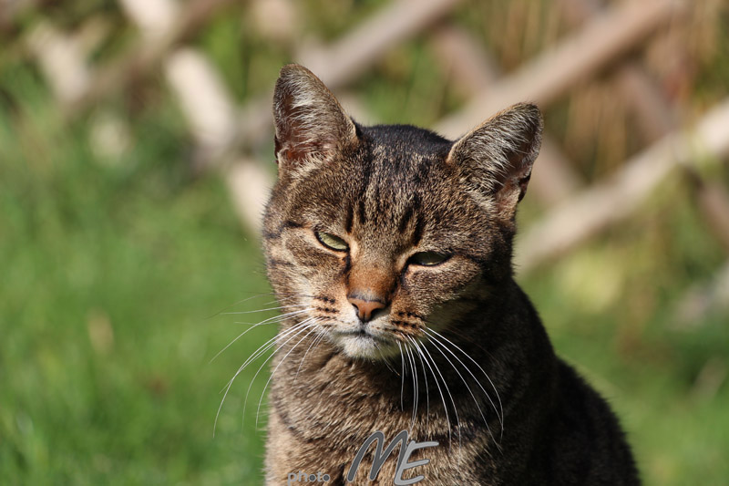 portrait_cat