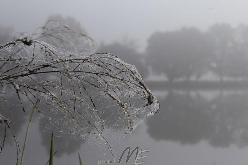 landscape_smothered in fog