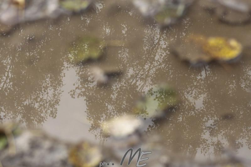 landscape_puddle